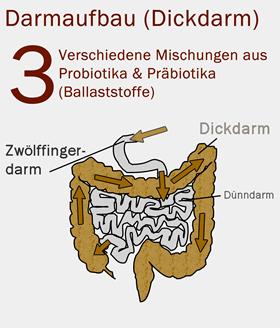 Darmflora aufbauen mit Probiotika & Präbiotika für den Dickdarm